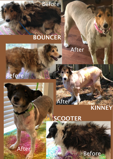 Kinney Scooter and Bouncer before and after grooming